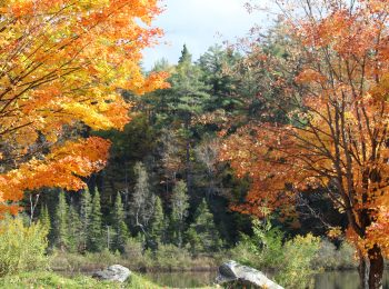 Fall Perfect Season